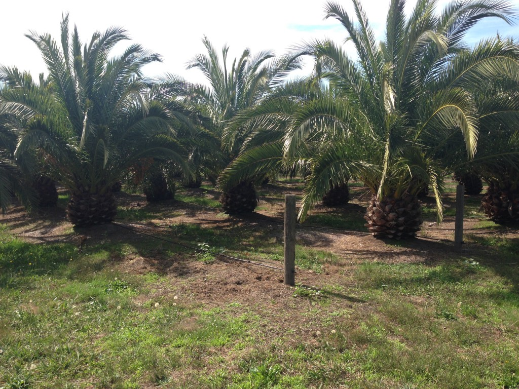 Palm Nursery