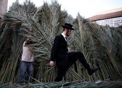 Jewish Palm leaves for sale