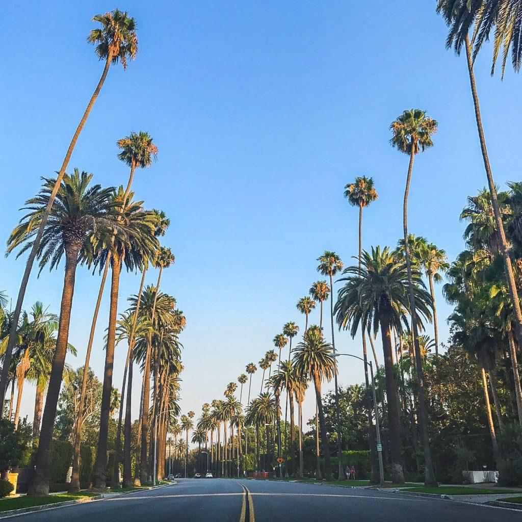 LA Palm Tree Varieties